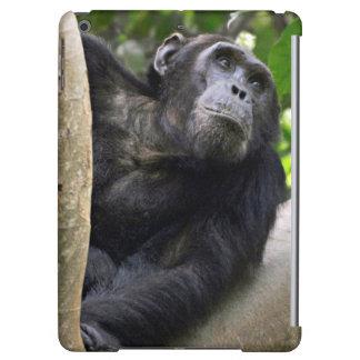View Of Chimpanzee (Pan Troglodytes) In Tree