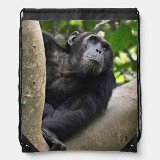 View Of Chimpanzee (Pan Troglodytes) In Tree Drawstring Bag