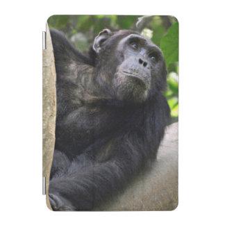 View Of Chimpanzee (Pan Troglodytes) In Tree iPad Mini Cover