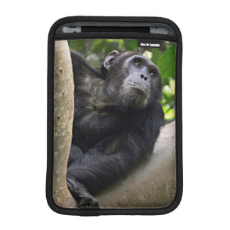 View Of Chimpanzee (Pan Troglodytes) In Tree iPad Mini Sleeve