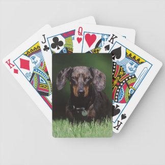 View of Dapple colored Dachshund Bicycle Playing Cards