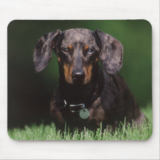 View of Dapple colored Dachshund Mouse Mat