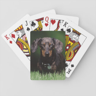View of Dapple colored Dachshund Playing Cards