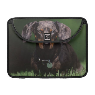 View of Dapple colored Dachshund Sleeve For MacBooks
