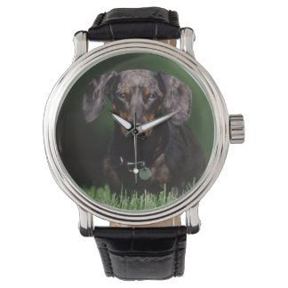 View of Dapple colored Dachshund Watch