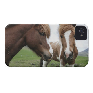 View of Horse, close-up iPhone 4 Covers