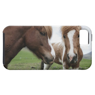 View of Horse, close-up iPhone 5 Case