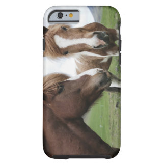 View of Horse, close-up Tough iPhone 6 Case