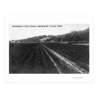 View of Hutchinson Celery Garden Postcard