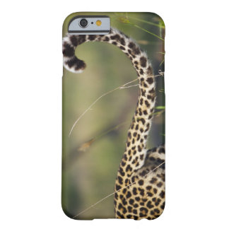 View of Leopards tail (Panthera pardus), Barely There iPhone 6 Case