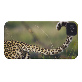View of Leopards tail (Panthera pardus), iPhone 4 Covers