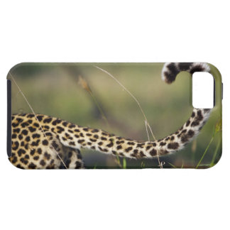 View of Leopards tail (Panthera pardus), iPhone 5 Covers