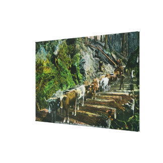 View of Ox-Teams Hauling Logs Gallery Wrap Canvas