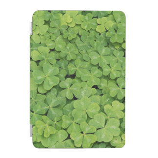 View of Oxalis Oregana wood Sorrel Foliage iPad Mini Cover