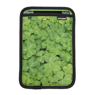 View of Oxalis Oregana wood Sorrel Foliage iPad Mini Sleeve