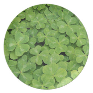 View of Oxalis Oregana wood Sorrel Foliage Plate
