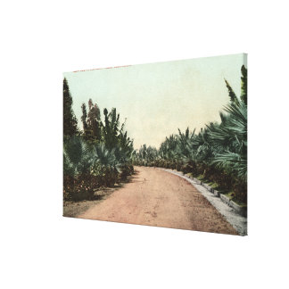 View of Palm Drive Canvas Print