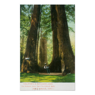 View of Redwood Twins at Big Tree Grove Poster