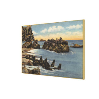 View of Seal Rocks with Seals Canvas Print