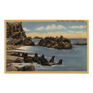 View of Seal Rocks with Seals Poster