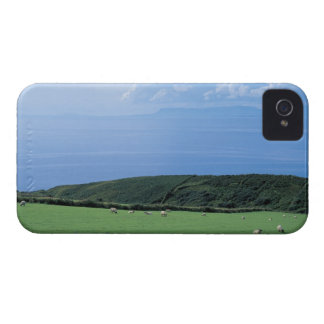 view of sheep grazing on lush hillside iPhone 4 cover