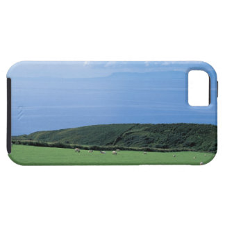 view of sheep grazing on lush hillside iPhone 5 case