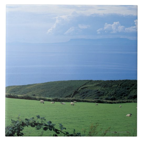 view of sheep grazing on lush hillside tile