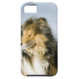 View of shetland sheepdog iPhone 5 cases