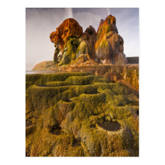 View of the Fly Geyser Post Card