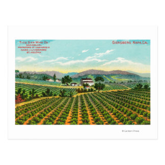 View of the Giersberg VineyardNapa, CA Postcard