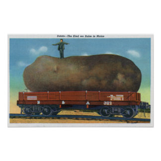 View of the Kind of Potatoes Raised in Maine Poster