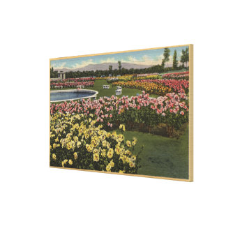 View of the Municipal Rose Garden Gallery Wrap Canvas