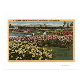 View of the Municipal Rose Garden Postcard
