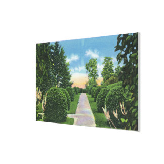 View of the Tanglewood Gardens # 2 Gallery Wrap Canvas