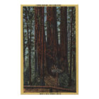 """View of """"Three Graces"""" at Big Trees Park Poster"""