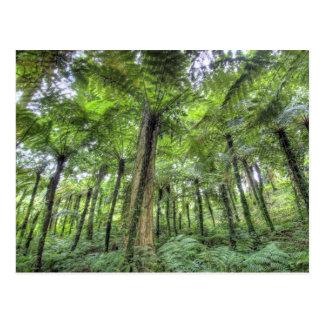 View of vegetation in Bali Botanical Gardens, Postcard