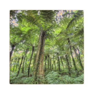 View of vegetation in Bali Botanical Gardens, Wood Coaster