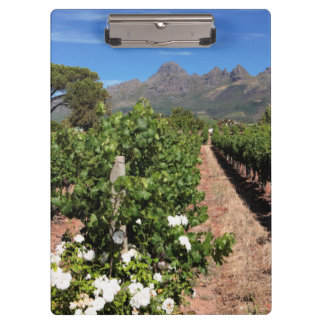 View Of Vineyards. Stellenbosch Clipboard