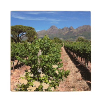 View Of Vineyards. Stellenbosch Wood Coaster