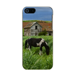 Viewing horses in a field in the Palouse 2 Incipio Feather® Shine iPhone 5 Case