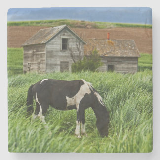 Viewing horses in a field in the Palouse 2 Stone Coaster