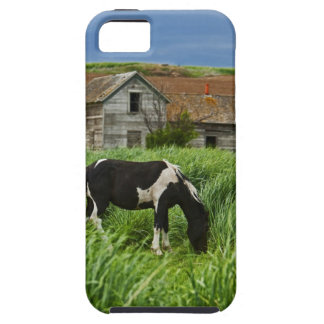 Viewing horses in a field in the Palouse 2 Tough iPhone 5 Case
