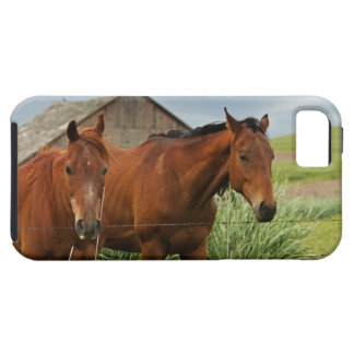 Viewing horses in a field in the Palouse 3 iPhone 5 Case