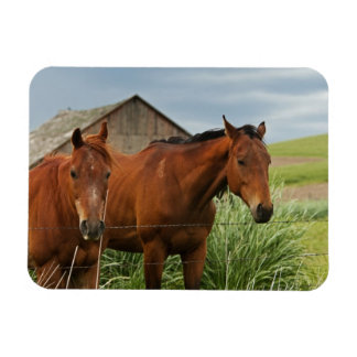 Viewing horses in a field in the Palouse 3 Rectangular Photo Magnet