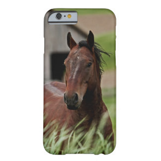 Viewing horses in a field in the Palouse Barely There iPhone 6 Case