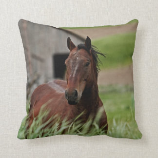 Viewing horses in a field in the Palouse Cushion
