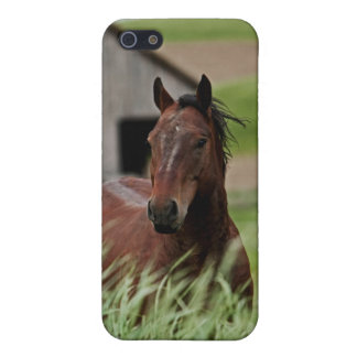 Viewing horses in a field in the Palouse iPhone 5/5S Covers