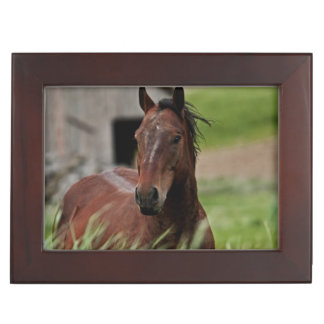Viewing horses in a field in the Palouse Keepsake Box