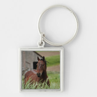 Viewing horses in a field in the Palouse Key Ring