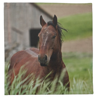 Viewing horses in a field in the Palouse Napkin